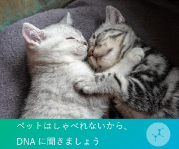 猫遺伝子検査 【Pontely】